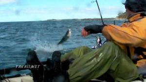North Coast Aussie Salmon